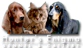 Hunter's Enigma Cattery